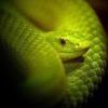 Боязнь змій