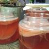 Цілющі властивості чайного гриба