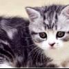 Чим годувати кошеня в 2 місяці
