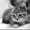 Чим годувати кошеня в 3 місяці