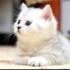 Чим годувати кошеня в 4 місяці