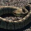 До чого сняться змії