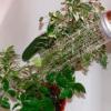 Як доглядати за рослинами взимку
