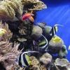 Як вибрати акваріумних рибок