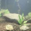 Як чистити грунт в акваріумі