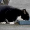 Як годувати кошеня