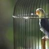 Як мити клітку папугу
