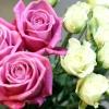 Як не помилитись при покупці троянд
