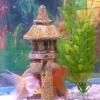 Як оформити акваріум