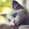 Як визначити вік кота