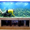 Як правильно чистити акваріум