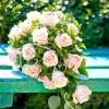 Як правильно вибрати весільний букет?