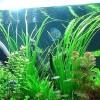 Як зробити кришку для акваріума з освітленням