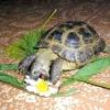 Як доглядати за черепахою