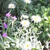 Як прикрасити і надати стиль садовій ділянці