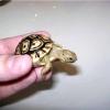 Як вибрати черепаху
