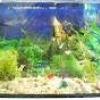 Як вибрати правильно акваріум