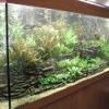 Яка температура повинна бути в акваріумі?