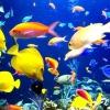 Яких рибок поселити в акваріум на 20 літрів