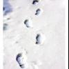 Коли чути скрип снігу?