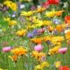 Лугові квіти