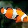 Морські рибки для акваріума