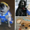 Одяг для домашніх тварин