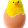 Чому курчата жовті?