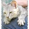 Чому кішки топчуться на людині?