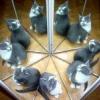 Чому у кішки 9 життів?
