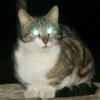 Чому у кішки світяться очі?