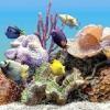 Чому вода в акваріумі каламутніє