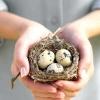Користь перепелиних яєць для чоловіків