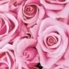 Рожевий колір в психології