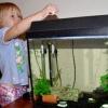 Скільки корму давати рибкам в акваріумі