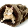Спальне місце для кішки